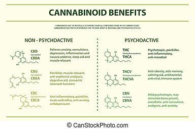 horizontais, benefícios, cannabinoid, infographic