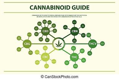 horizontais, cannabinoid, guia, infographic