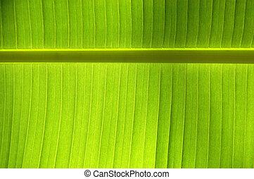 Horizontal Background of a Leaf