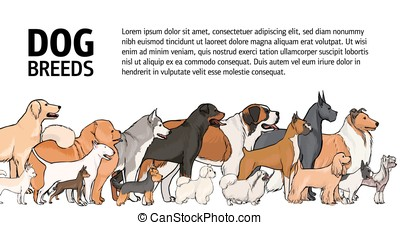 Horizontal banner with dogs of various breeds and place for text on white background. Group of different gorgeous purebred pet animals with colorful coats, side view. Realistic vector illustration.