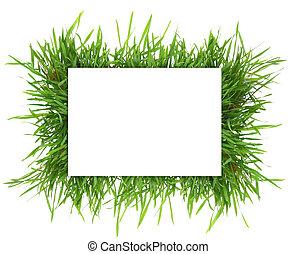 horizontal, bannière, rectangle, frais, isolé, herbe, vide, blanc