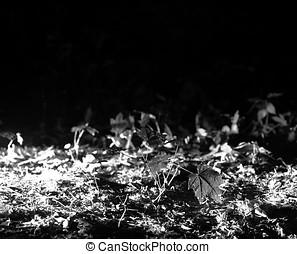Horizontal black and white grass bokeh background hd