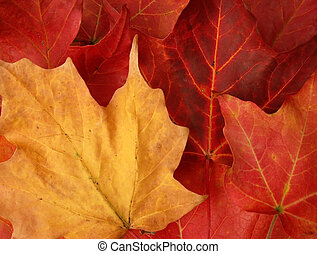 horizontal close-up of fall leaves