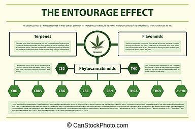 horizontal, entourage, effet, infographic