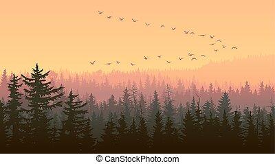 Horizontal illustration of foggy sunset forest hills.
