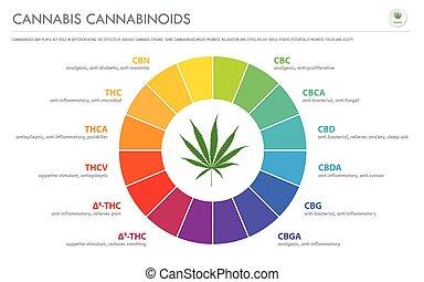 horizontal, infographic, geschaeftswelt, cannabis, terpenes