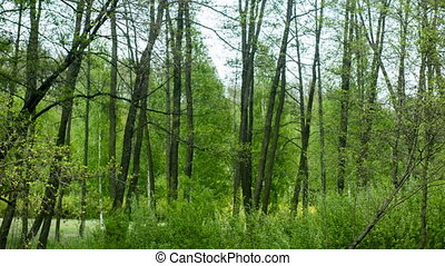 Horizontal l dolly shot of green forest