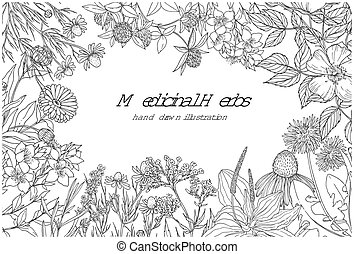 Horizontal monochrome banner with medicinal flowers and ...