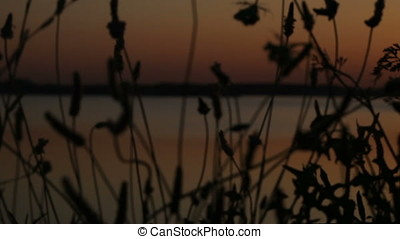 Horizontal Pan Shot over Wild Plants Silhouette at Sunset -...