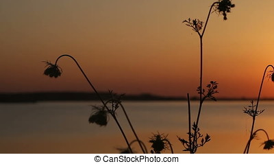 Horizontal Pan Wild Plants Backlit Silhouette - Horizontal...