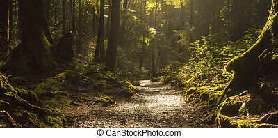 Rainforest Path - Horizontal Photo of a Rainforest Path