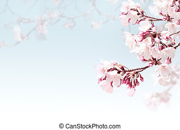 Horizontal spring background with sakura flowers