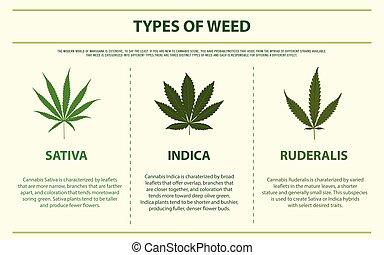 horizontal, types, mauvaise herbe, infographic