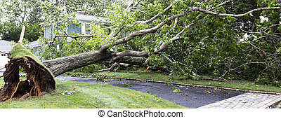 Horizontal view of tree that fell over driveway and wires during a tropial storm