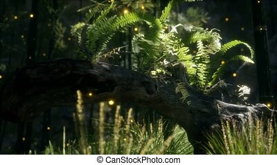 horizontally, выращивание, солнечный лучик, ferns, bending, хобот, дерево, shining