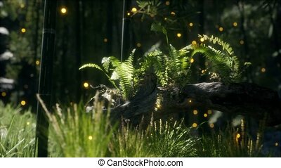 horizontally bending tree trunk with moss and ferns growing on it, and sunlight shining