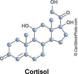 hormônio, cortisol, esteróide