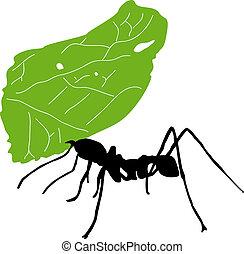 hormiga, hoja, cortador