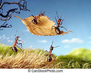 hormiga, hoja, tales, vuelo, hormigas
