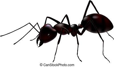hormiga, vector