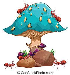 hormigas, hongo, colonia, gigante