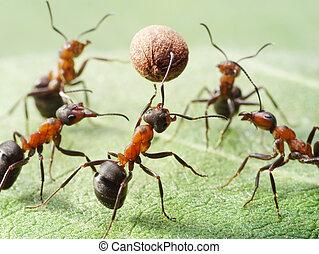 hormigas, pimienta, semilla, juego, voleibol