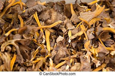 horn of plenty mushroom.