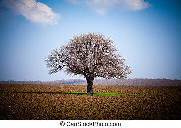 Hornbeam (Carpinus Betulus) - European hornbeam (carpinus ...