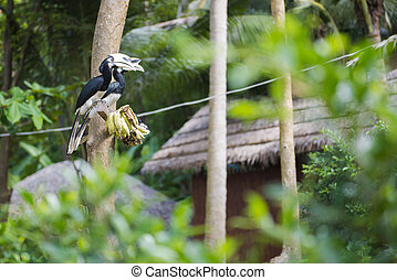 hornbill perching on a branch in the forest