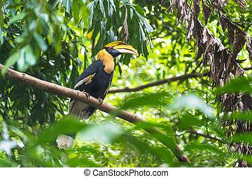 Hornbills, bird on the tree