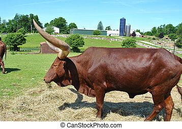 Horned Bull on a Country Farm