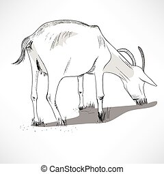 Horned Goat Eating Grass - Black and white lineart ...