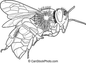 hornet - Vector line drawing