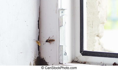 Hornet's Nest in the Window Frame Euro Windows. Full HD 1920...