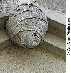 low angle shot of a big hornets nest located under a roof overhang