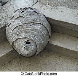 shot of a big hornets nest located under a roof overhang, seen from below