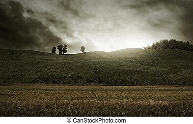 Horror field background
