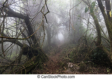 Horror path in forest