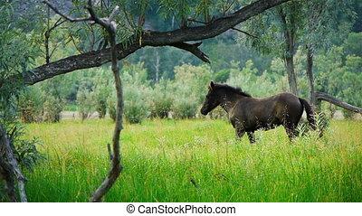 Horse 3 - Horse