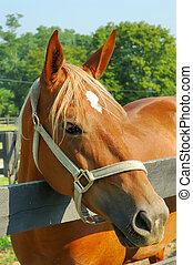 Horse - A beautiful chestnut colored horse with blonde hair...