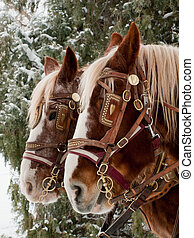 Horse - A carriage pulled by a pair of horses.