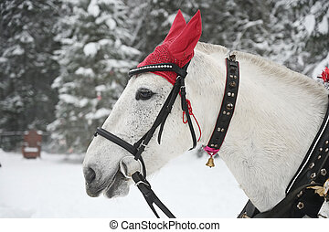 Horse against the background of a winter forest