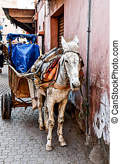 horse and carriage in sevilla, photo as background