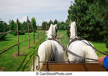 Horse and cart ride