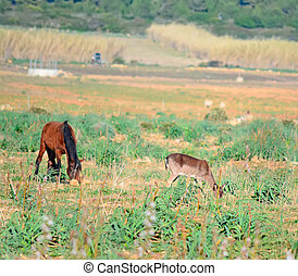 horse and deer in a field