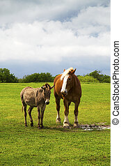 Horse and Donkey in a Pasture Near Ennis, Texas