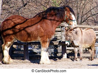 Horse and Donkey - A Clydesdale horse and donkey snuggling
