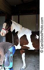 Farrier working on horseshoe inside stable.