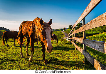 Horse and fence in a field on a farm in York County, Pennsylvania.
