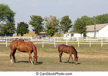 horse and foal in corral farm scene